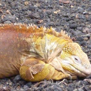 Galapagos4 2
