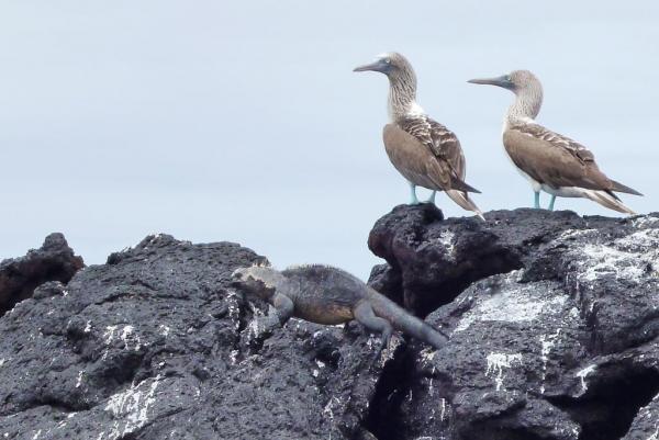 Galapagos9 1