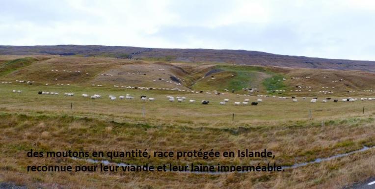 Islande 7 2